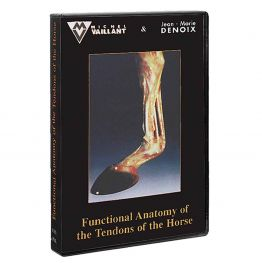 Functional Anatomy/Tendons/Horse (Video)